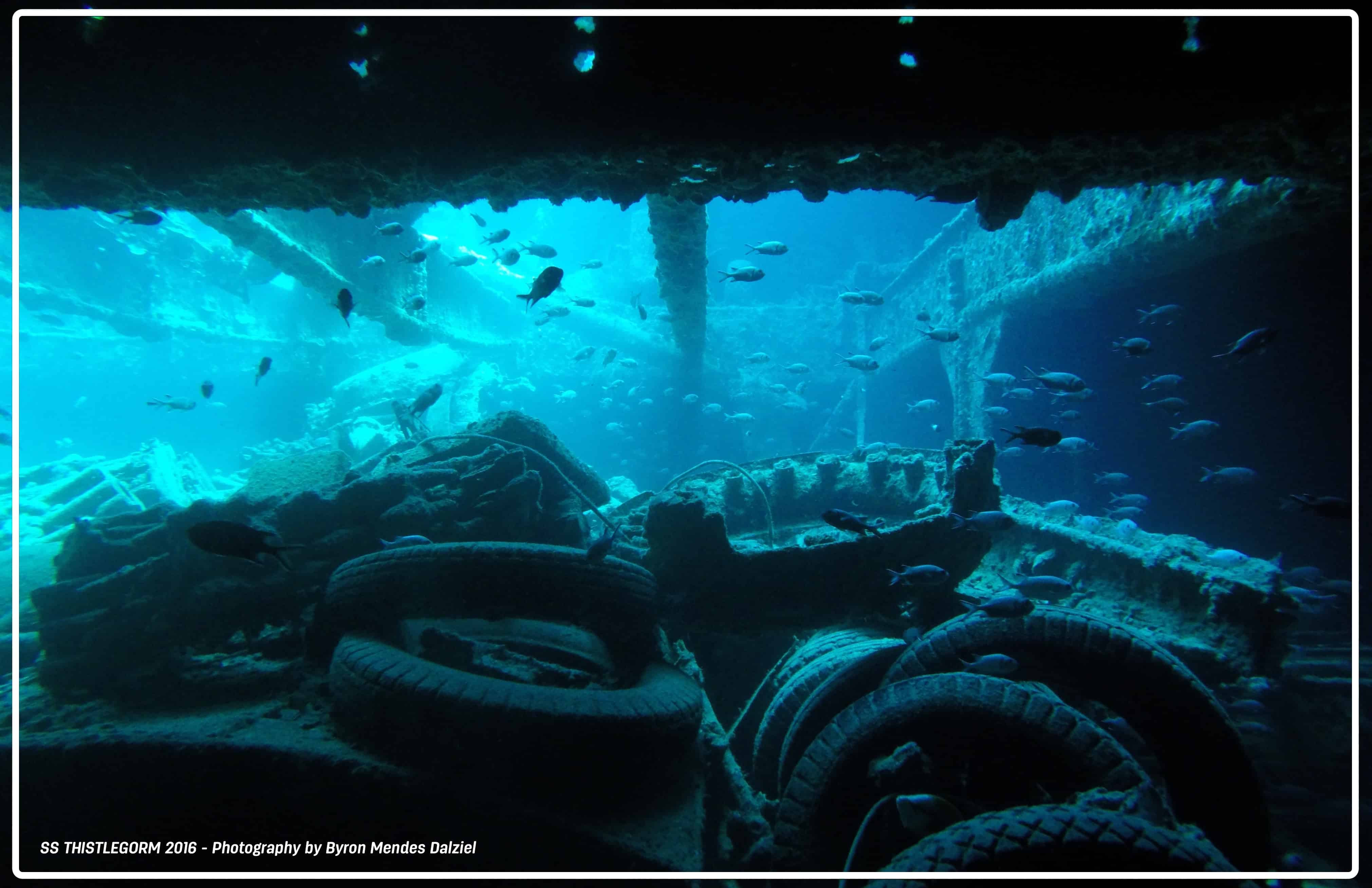 THE ULTIMATE DIVING EXPERIENCE - THE RED SEA