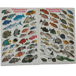 Fishwatchers Field Guide Slate
