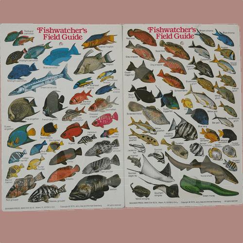 Fishwatchers Field Guide Slate